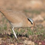 birding trip to the Canary islands