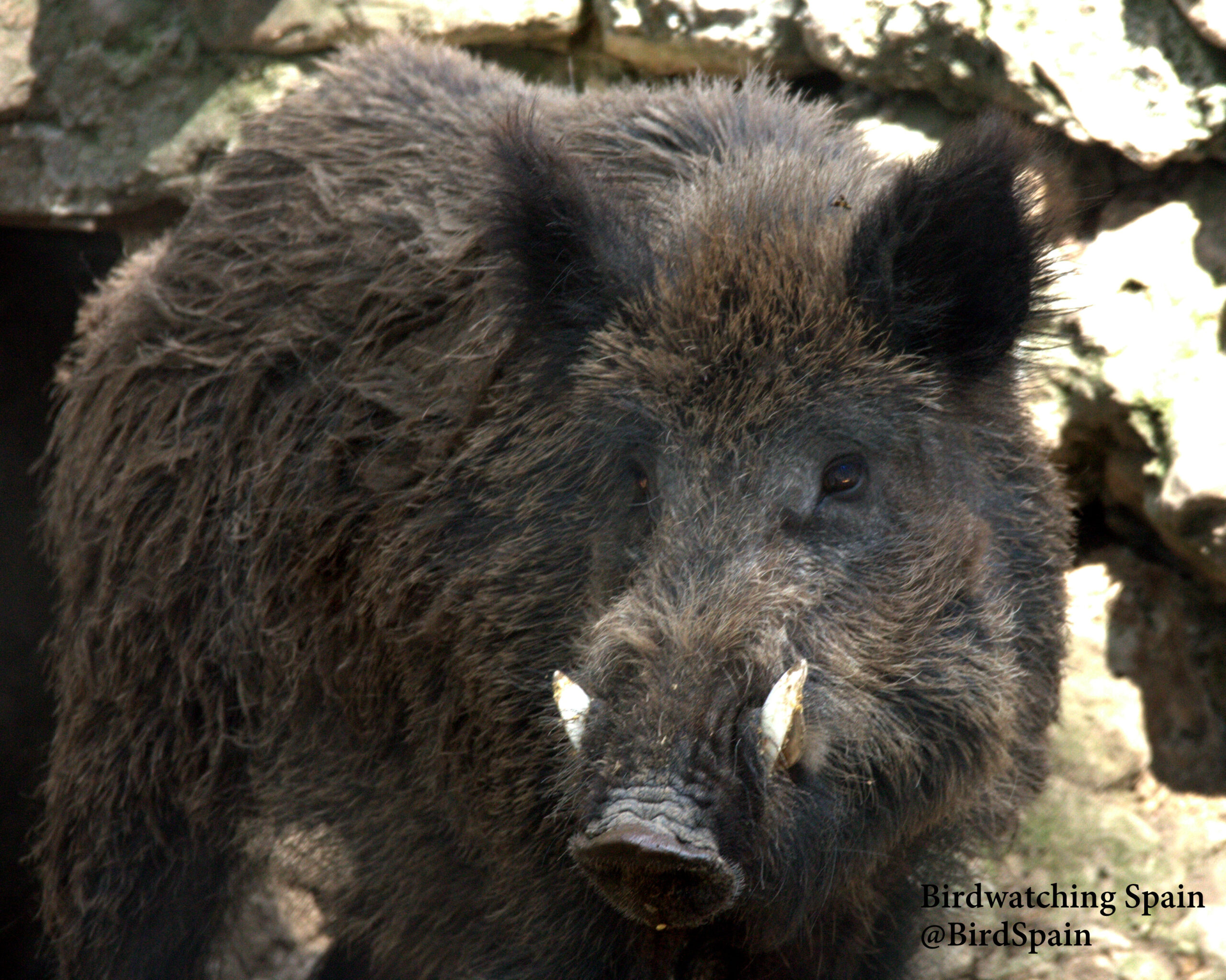 Birding La Mancha Humeda | Birdwatching Spain