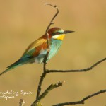 bird watching tour Doñana