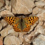 Carnivorous, birds and butterflies in NW Spain