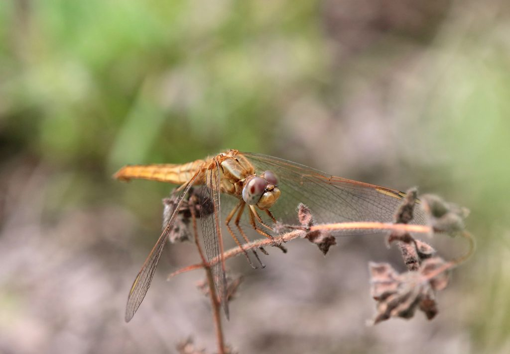 dragonfly tours in Spain