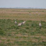 birding trip donana