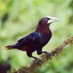 viaje de observación de aves en Costa Rica