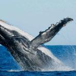 viaje ornitológico a Sri Lanka-ballenas