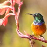 observación aves y mamíferos Sudáfrica-Suimanga
