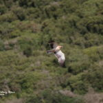 Bird watching tour to the Strait of Gibraltar