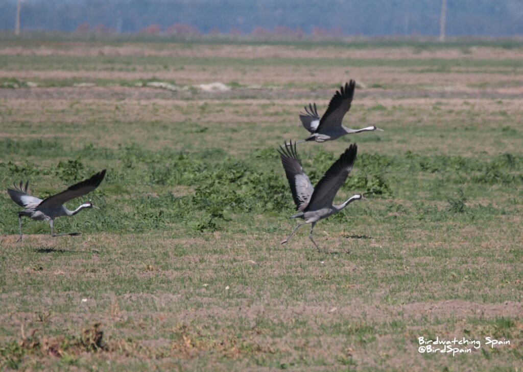 birdwatching report doñana