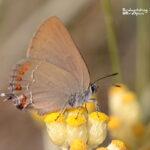 Butterflies in Valencia