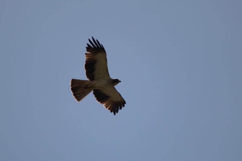Extremadura birding tour