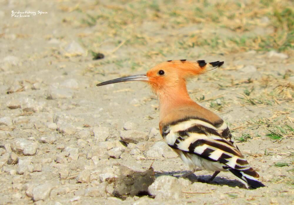 ver aves en la albufera de valencia