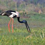 Viaje ornitológico a la India