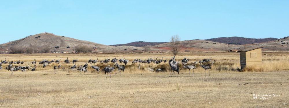 photography hides cranes