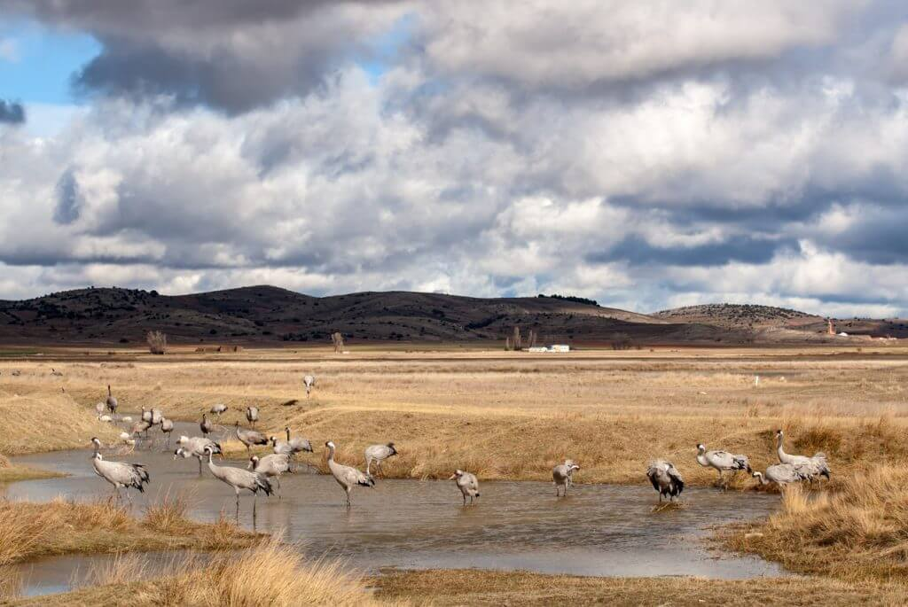 photographing cranes Spain