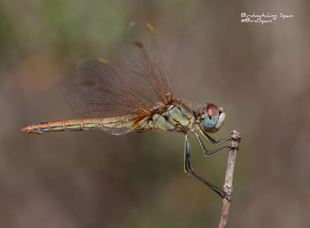 dragonflies tours in Valencia