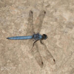 dragonfly tours in valencia