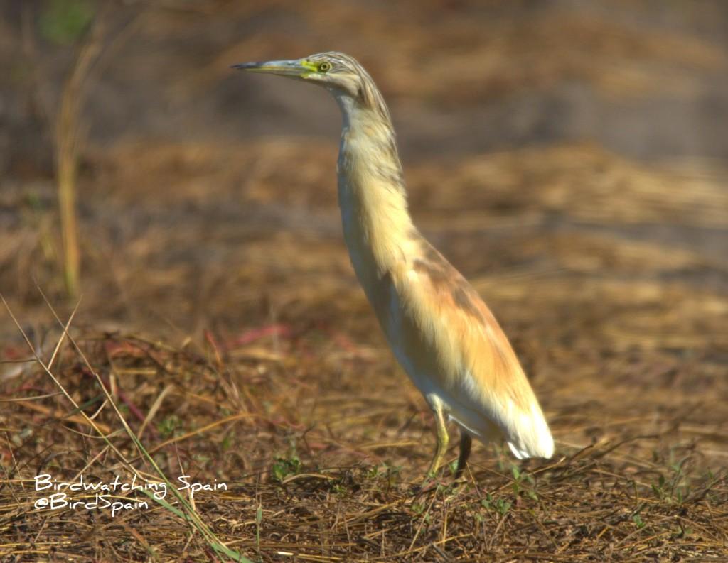 observación de aves en la albufera