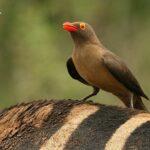 Viendo aves en Sudáfrica
