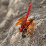 dragonfly tours in Spain-birdwatching spain
